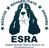 English Springer Rescue America, Inc.